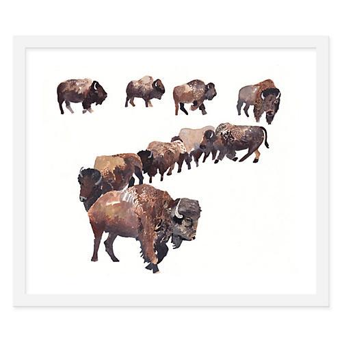 Michelle Morin, Bison Herd