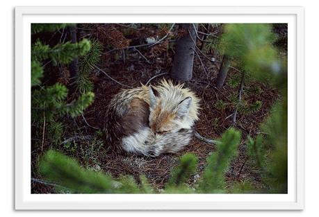 Kevin Russ, Sleeping Fox