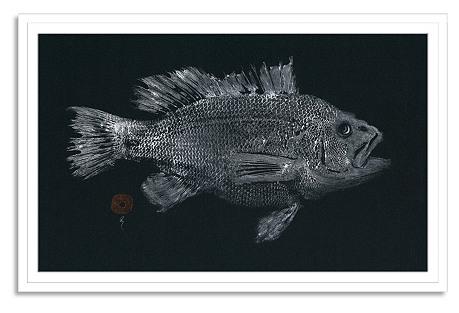 East End Fish, Black Seabass
