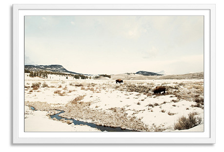 Christine Flynn, Bison, Lamar Valley