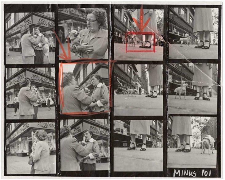 Erwitt Contact Sheet, Chihuahua, 1946