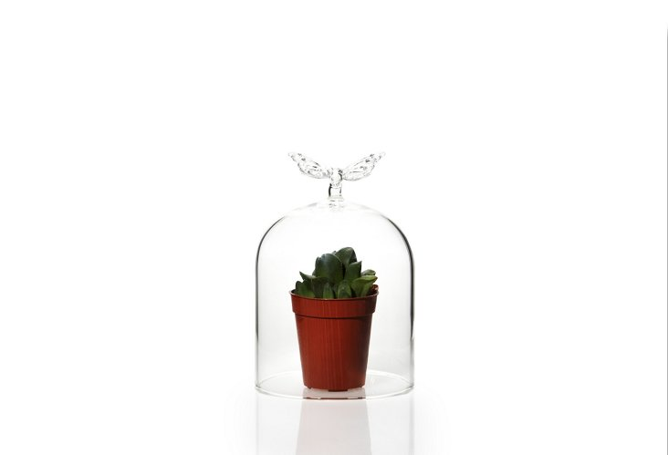 S/2 Butterfly Cloches