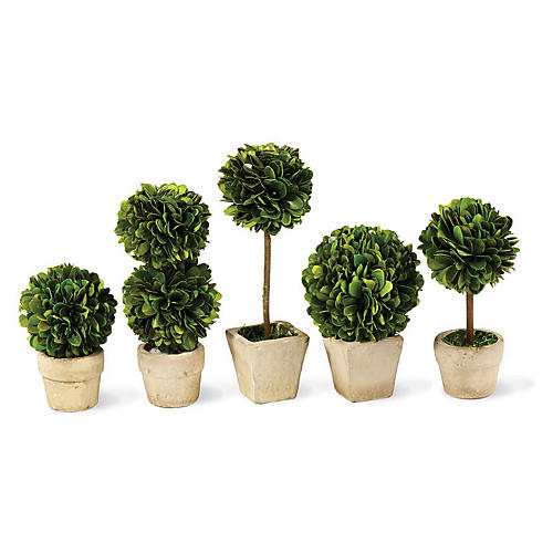 Asst. of 5 Preserved Boxwood Topiaries