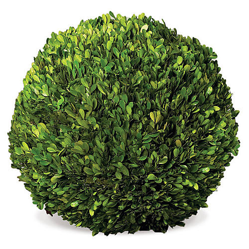 "16"" Ball Topiary, Preserved"