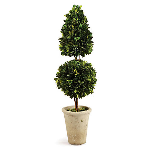 "25"" Short Cone & Ball Preserved Topiary, Green"