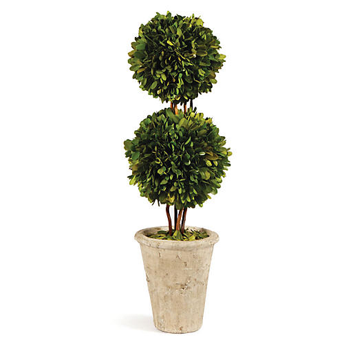 "20"" Double-Sphere Topiary, Preserved"