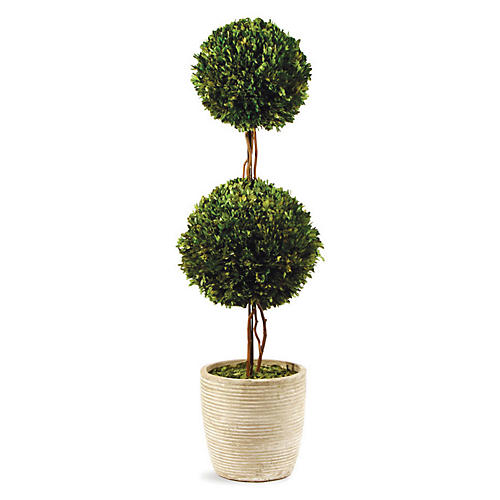 Double-Sphere Ribbed Preserved Topiary, Green