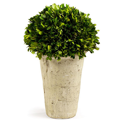 "12"" Three-Quarter-Ball Preserved Topiary, Green"