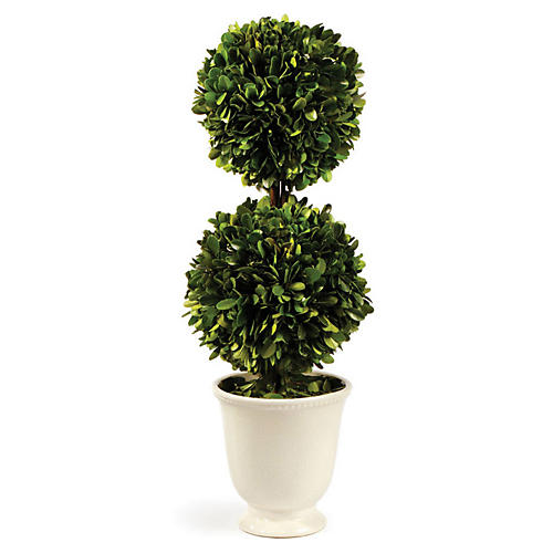 "19"" Double-Ball Preserved Topiary, Green/White"