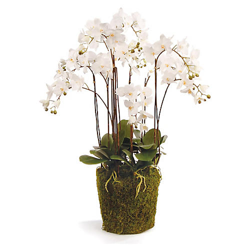 "36"" Phalaenopsis Wide Arrangement, Faux"