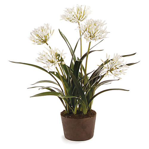 "39"" Agapanthus Arrangement, Faux"