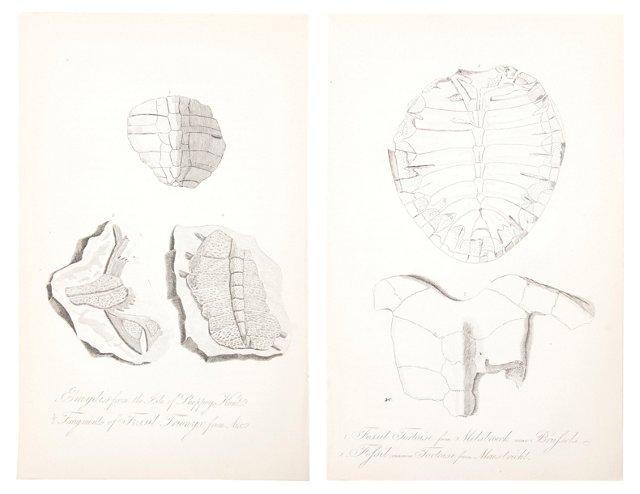 19th-C. Tortoise Engravings, Set of 2