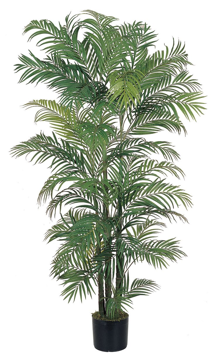 6' Georgia Areca Palm Tree, Faux