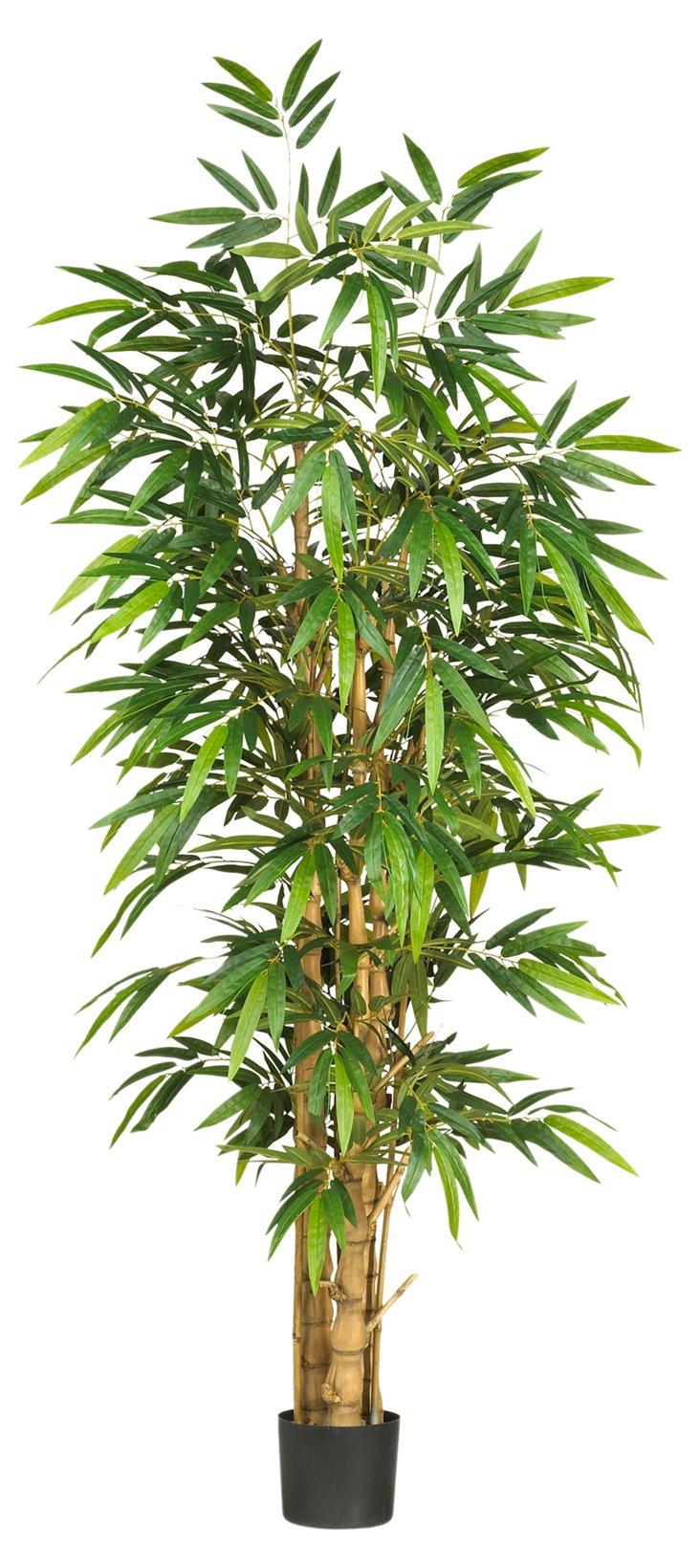 6' Buddha Bamboo Tree