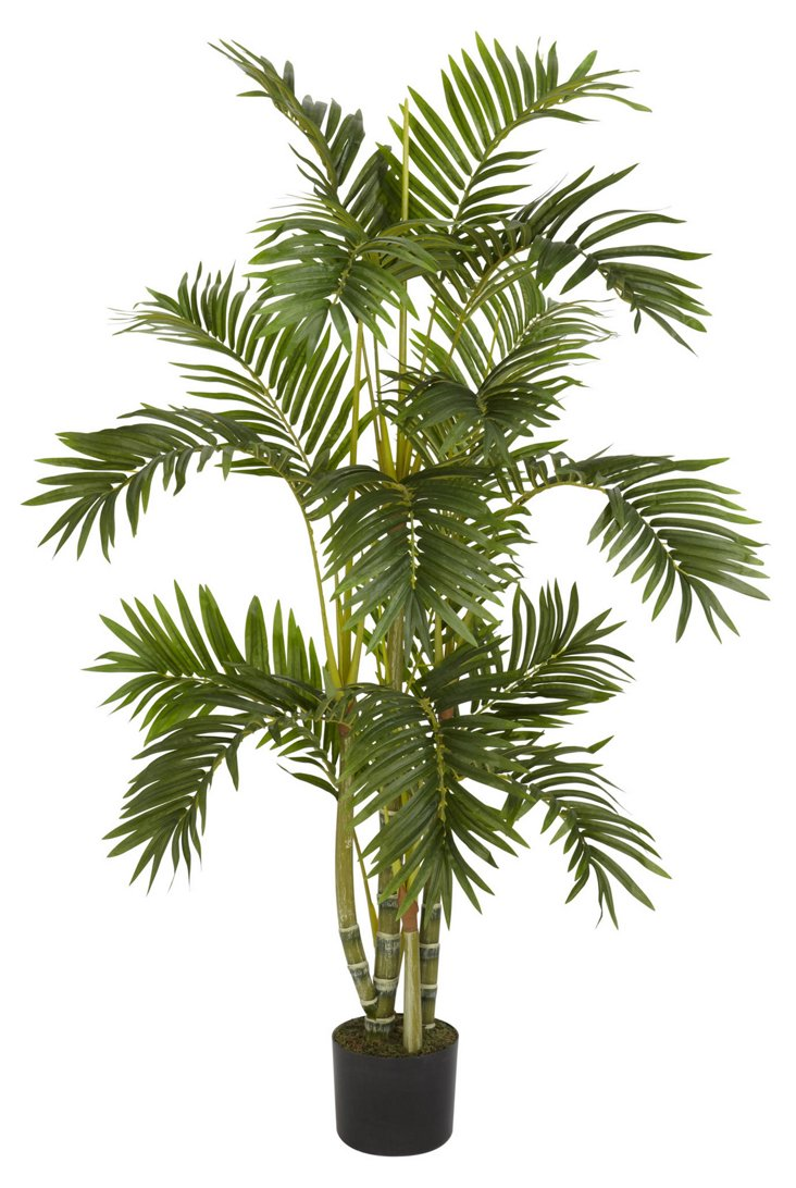 "48"" Areca Palm"