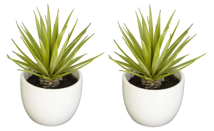 """S/2 6"""" Succulents in Pots, White, Faux"""