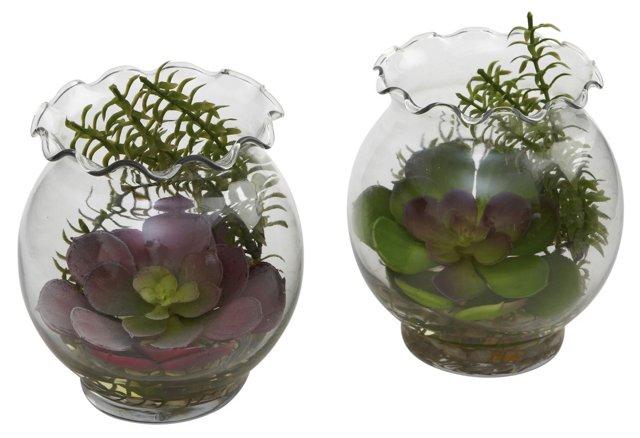 "Asst. of 2 6"" Succulents in Vases, Faux"