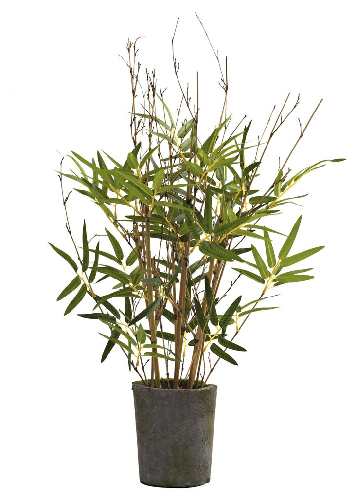 """27"""" Bamboo Tree in Cement Pot, Faux"""