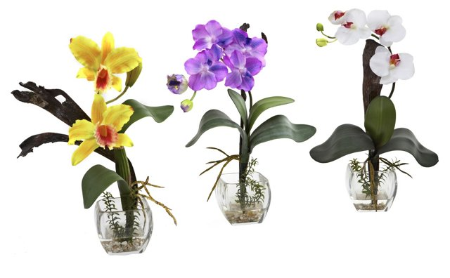 Asst. of 3 Mixed Orchids in Vases, Faux