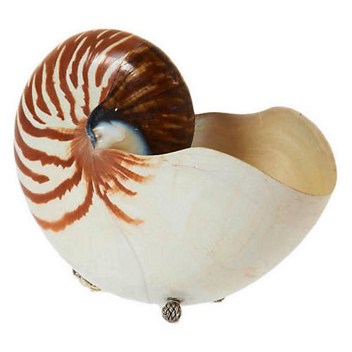 "7"" Nautilus w/ Sterling Silver, Brown"