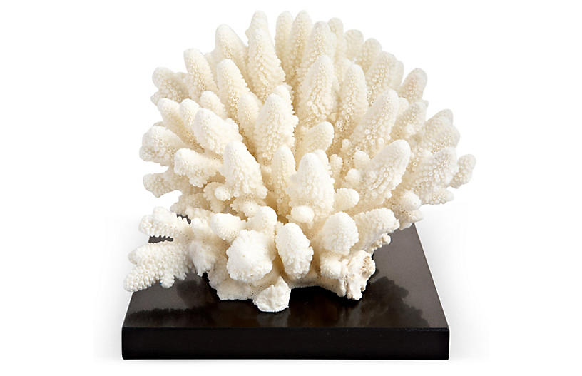 White Finger Coral on Marble & SS Base