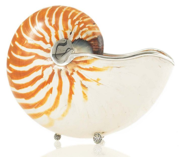 """10"""" Nautilus Shell w/ Sterling Silver"""