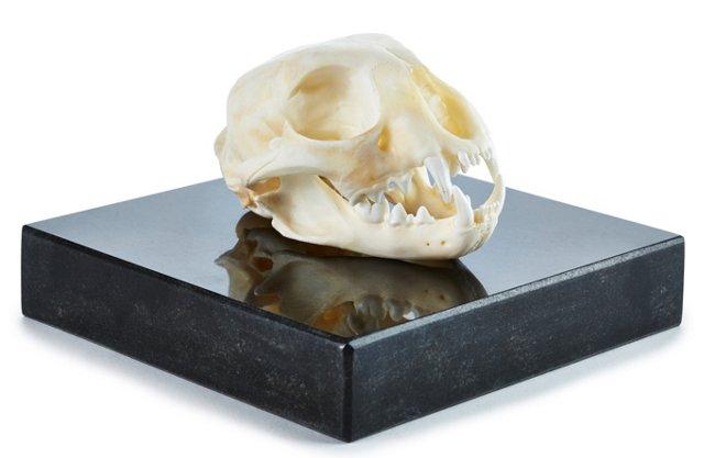 """4"""" Bobcat Skull w/ Granite Base"""