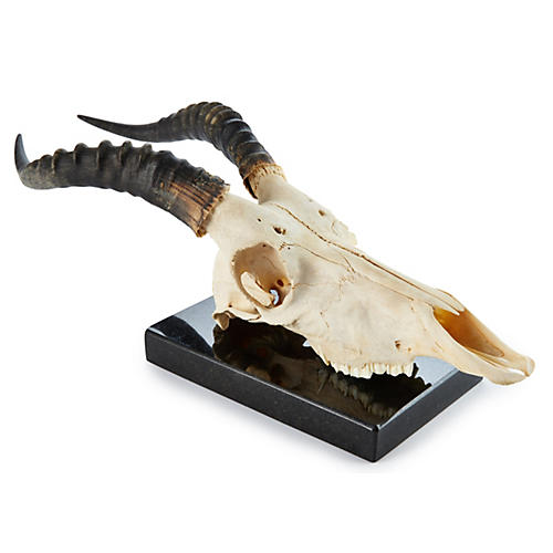 Blesbok Skull on Marble Base