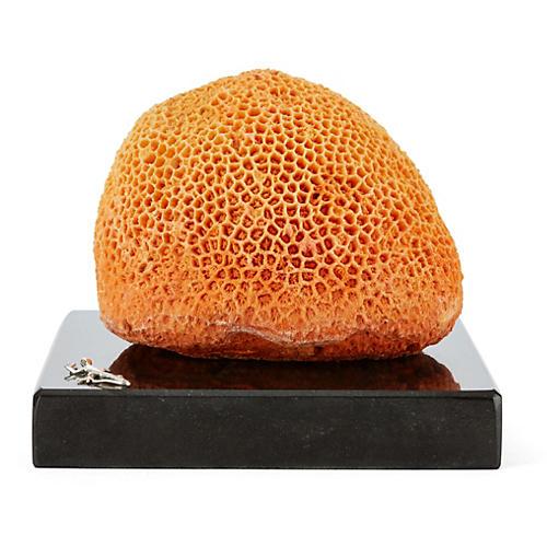Orange Brain Coral on Marble & SS Base
