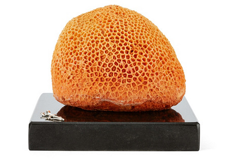 Orange Brain Coral on Marble & SS Base