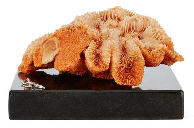 Open Brain Coral on Granite, Orange