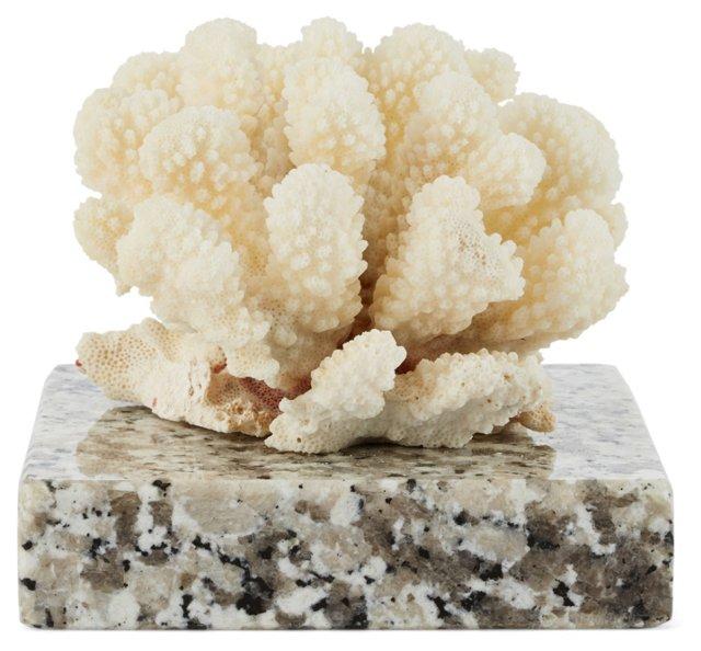 "5"" Cat's-Paw Coral on Granite"