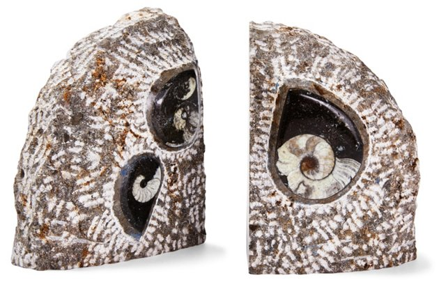 Pair of Ammonite Fossil Bookends