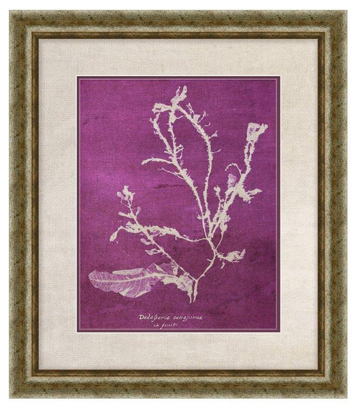 Purple Coral Print II