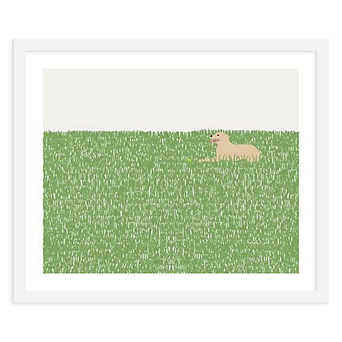 Dog In Grass, Jorey Hurley