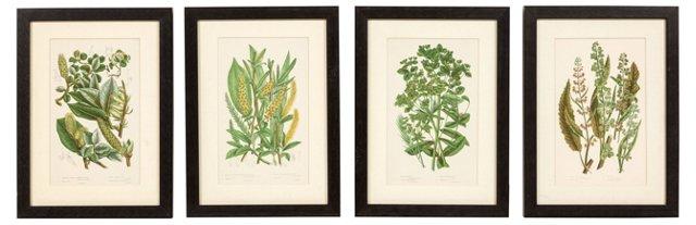 Vintage Botanical Prints. Set of 4