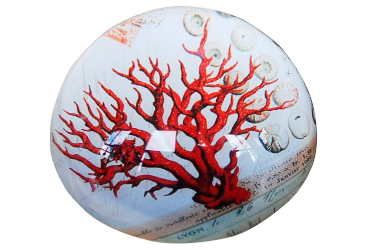 Glass Paperweight w/ Coral