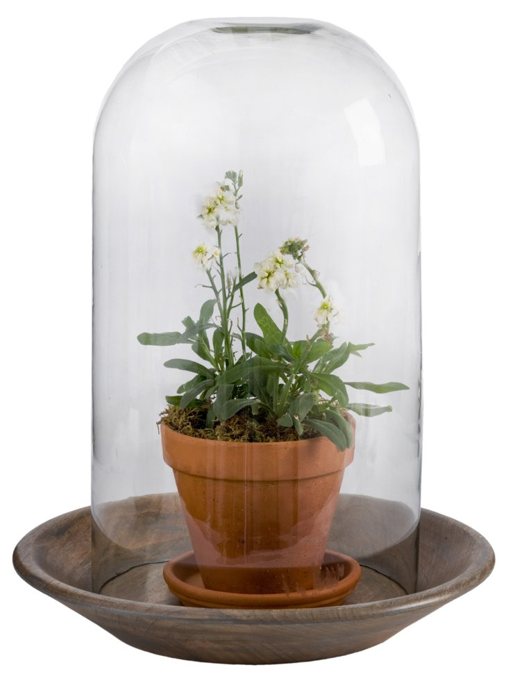 """19"""" Glass Cloche on Wood Tray"""