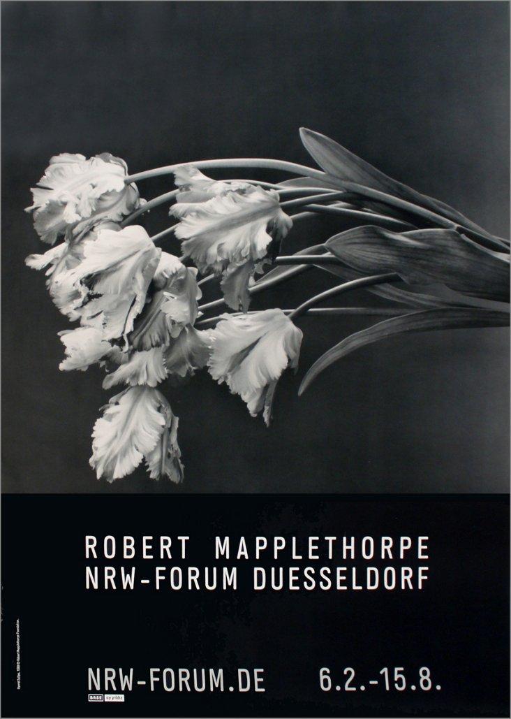 Robert Mapplethorpe, Parrot Tulips