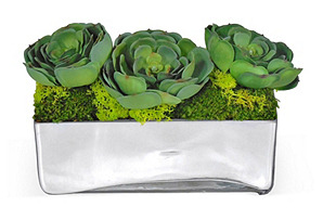 """6"""" Succulents & Moss in Planter, Faux"""