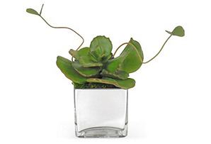 """7"""" Butterfly Succulent in Mirrored Vase"""
