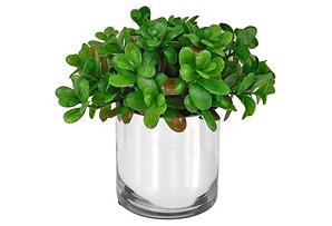 "10"" Jade Plant in Mirrored Vase"