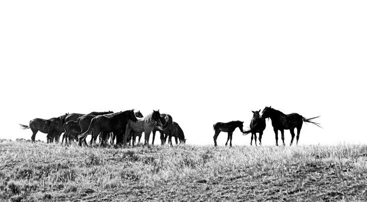 Cindy Bennett, Silhouette in Black & White