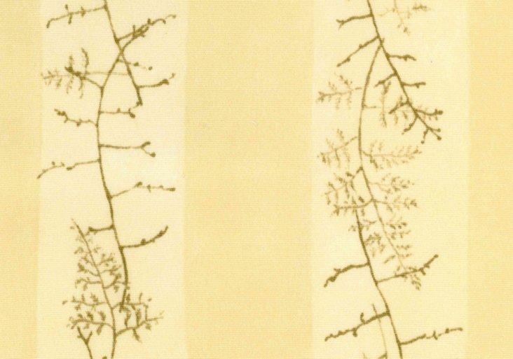Twig Fern, Aloe, 5 Yds
