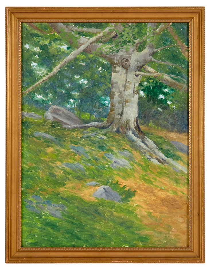 Oil Painting, Sycamore Tree