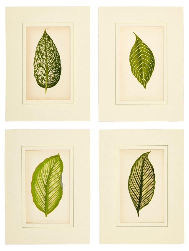 Botanical Prints, Set of 4, II