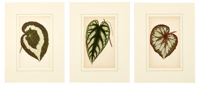 Botanical Prints, Set of 3, V