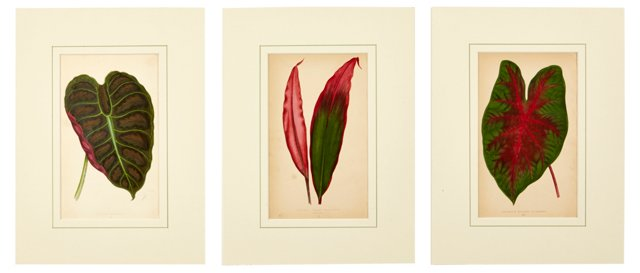 Botanical Prints, Set of 3, VII