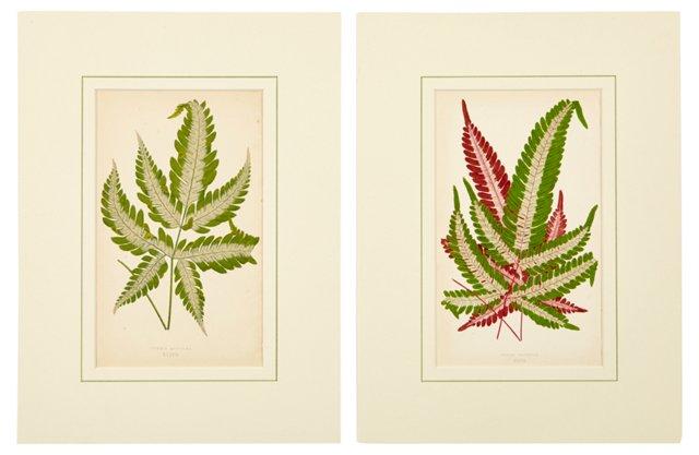 Botanical Prints, Pair III