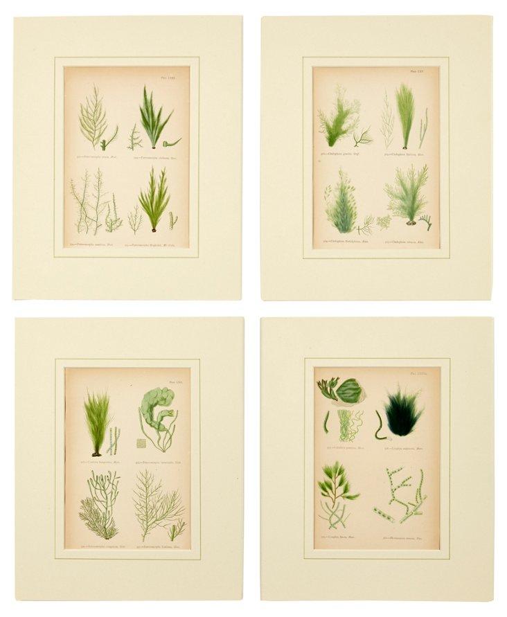 Seaweed Prints, Set of 4, I